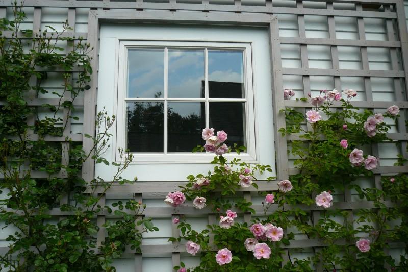 rose-trellis-website